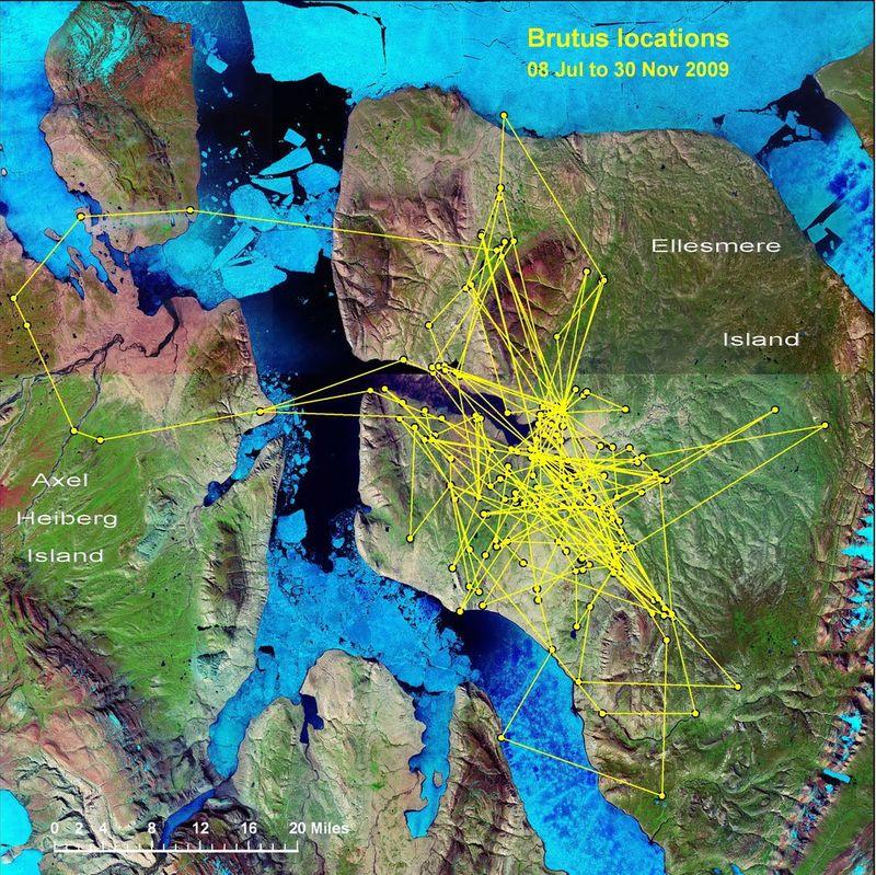 Brutus map