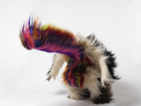 Nick-cave-furry-headbang1-565x423